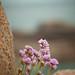Fleurs de granit