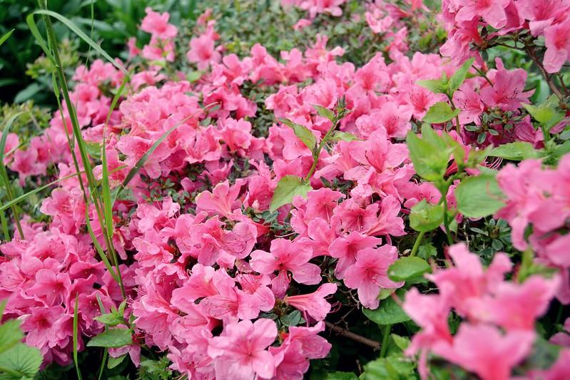 flores bonsai 2