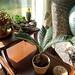 Plants and Tina