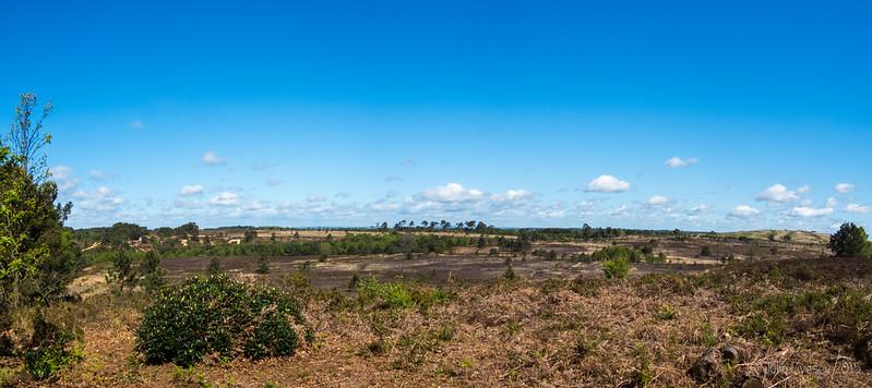 Canford Heath panorama
