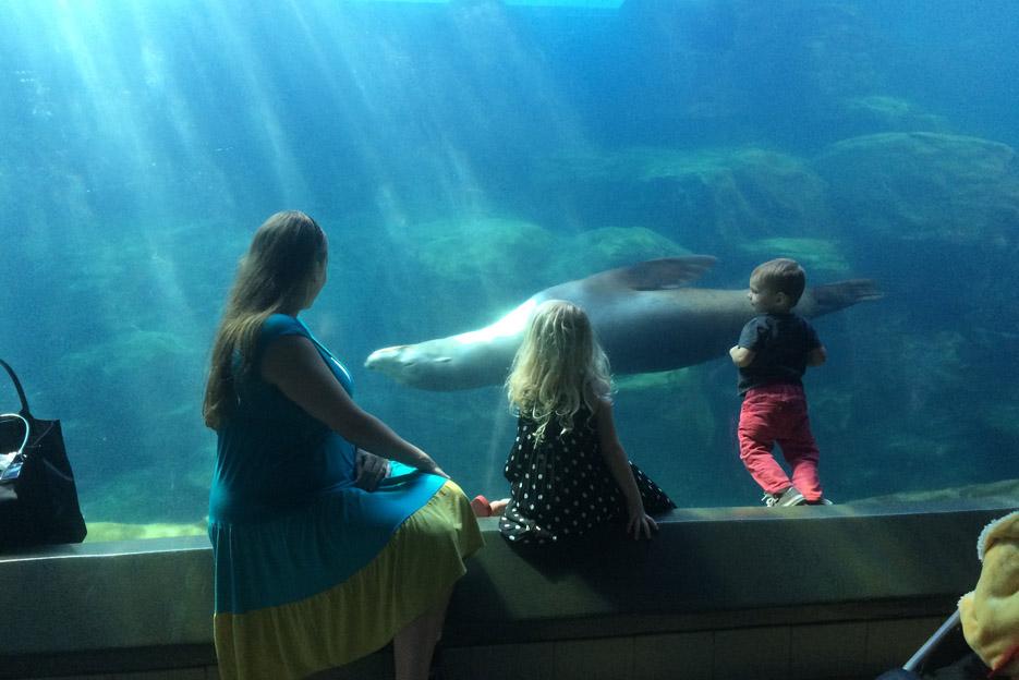 022415_aquarium10