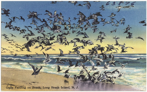 Gulls feeding on beach, Long Island Beach, N. J. | by Boston Public Library