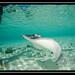 2012-4 Bahamas-5436.jpg