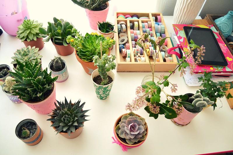 plantas en el escritorio 2