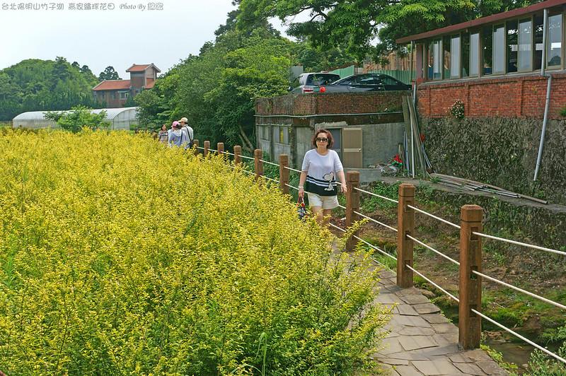 2015.05.17~台北陽明山竹子湖高家繡球花田遊拍
