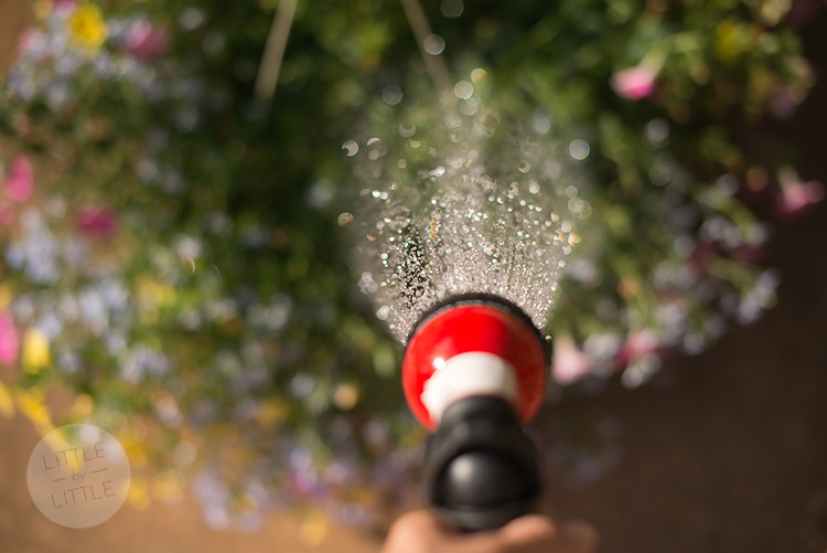 Watering-blog
