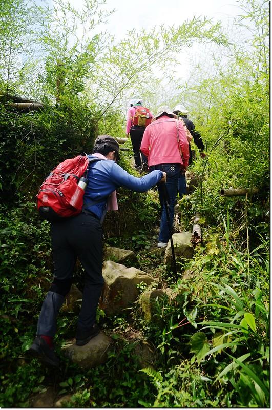 鳳凰山登山步道 1