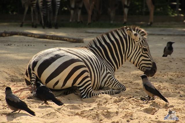 Zoo Berlin 19.05.2015  39