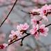 Pink Flower Bokeh