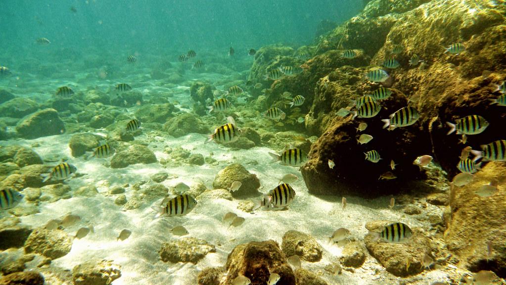 Snorkeling West Palm Beach