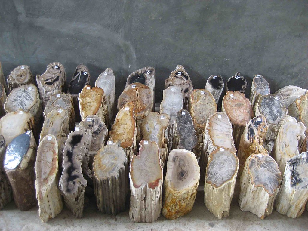 Polished Petrified Wood Prices Small Decoration Polished