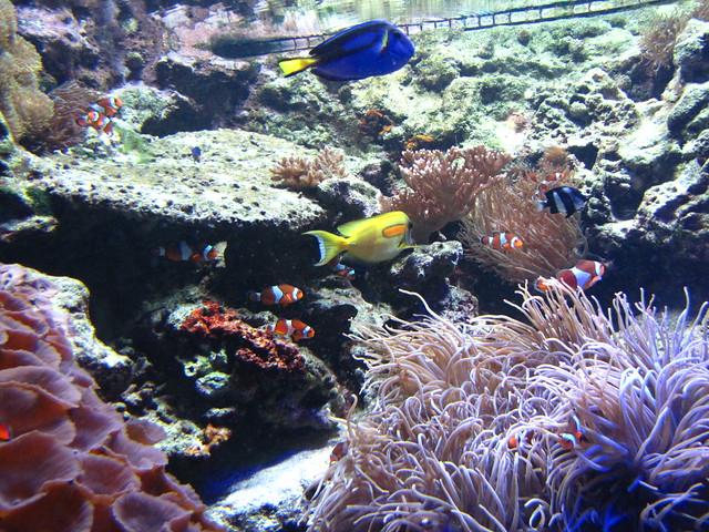 Vancouver Aquarium Flickr Photo Sharing