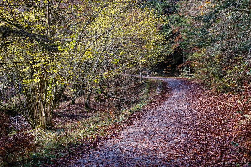 Inicio del sendero que cruza la Selva de Irati.