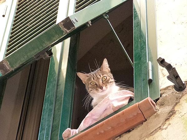 le chat à sa fenêre