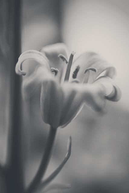 131 Blüüümchen