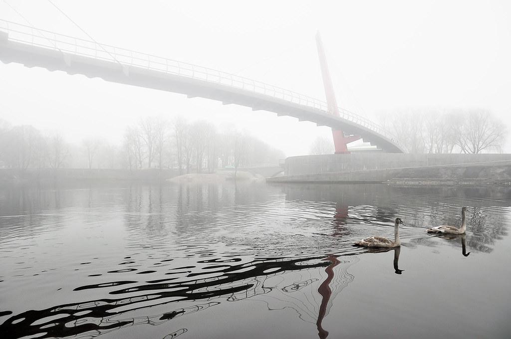 Divi gulbji zem Jelgas Miitavas tilta 28.11.2012