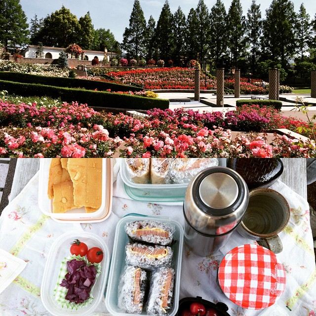 it's that time for roses. we love this park, no admission! today's breakfast bento: spam egg onigirazu, cherries, pickles, tomato & island lava cookies. hot coffee for hubs & coldbrew for me. happy sunday☀️🌹#aramakirosepark #itami #hyogo #rose #