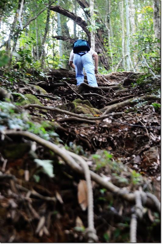 鳳凰山登山步道 4