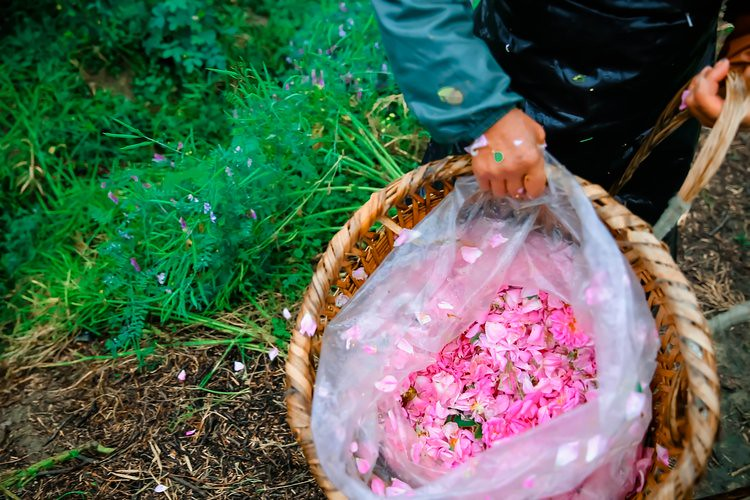 # Flowers long You Deyang on 3rd roamed deyang, exploring ancient civilizations