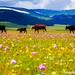 Cow's Paradise
