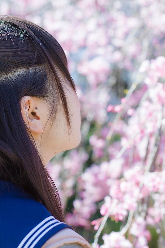 桜 Sakura Portrait
