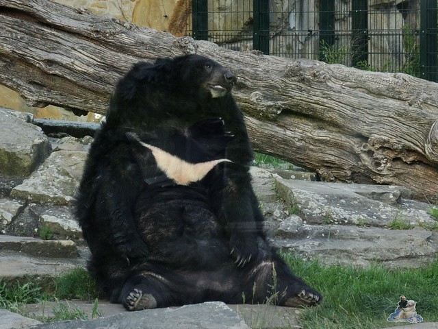 Zoo Berlin 19.05.2015 92