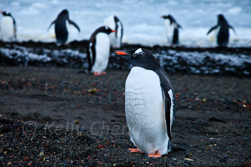Antarctica-111122-308 | by Kelly Cheng