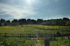 HDR in Upper Batley