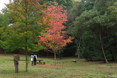 Kasuya Research Forest