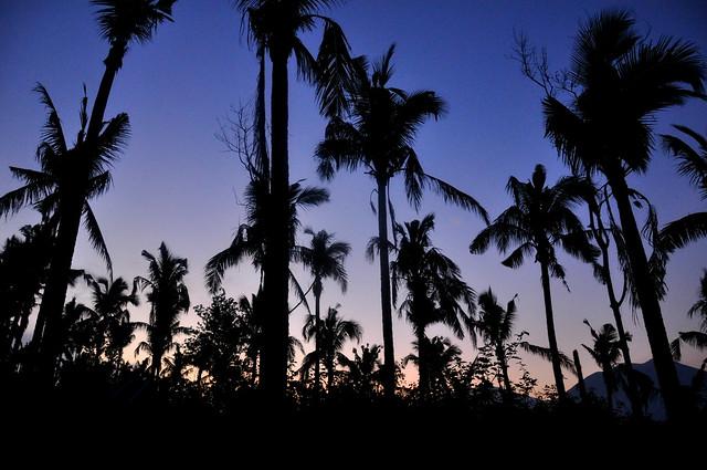 Coco Tree Sunrise