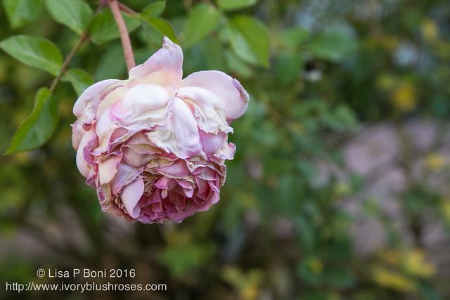 2016.10.31-Garden07