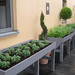 The herb garden on the Royal Opera House roof terrace. © ROH / Hywel David 2013