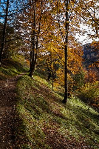 Los colores del otoño en lo alto de Zabaleta, Selva de Irati.