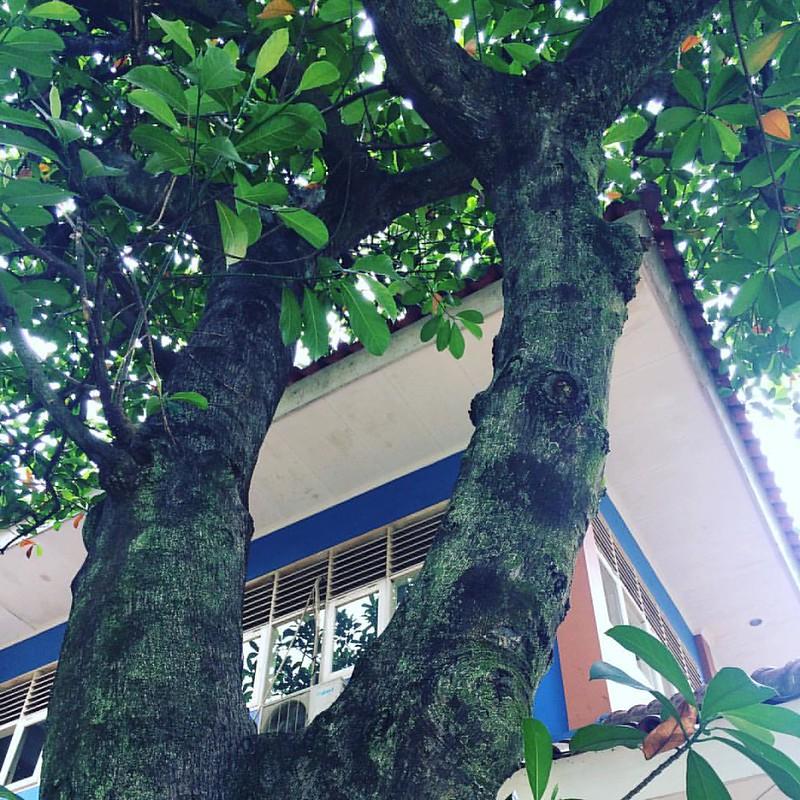 89-storey tree house.