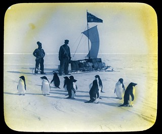 Penguins and a sled | by State Library Victoria Collections