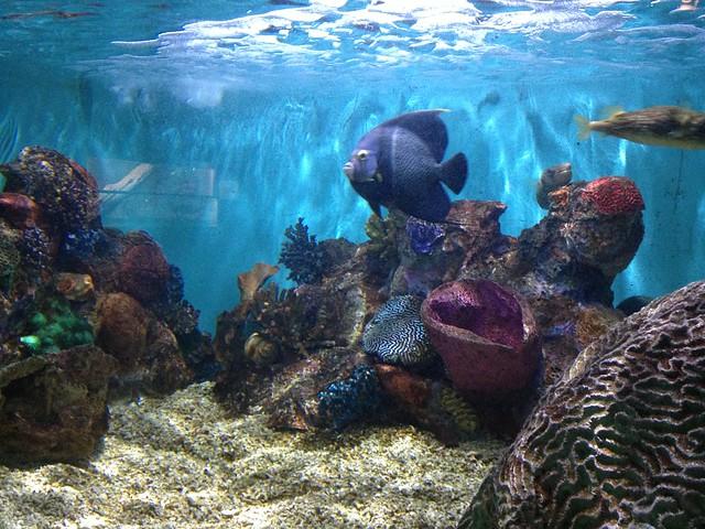 Niagara Falls Aquarium 17 Flickr Photo Sharing