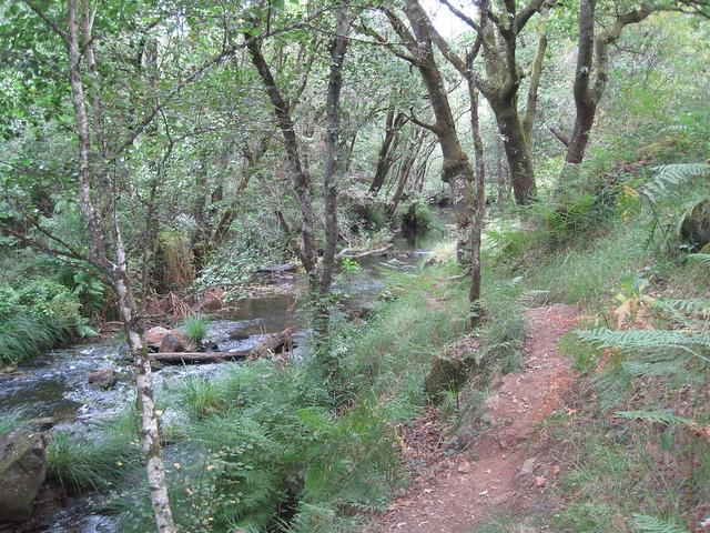 Sendero de la senda botánica del río Mera