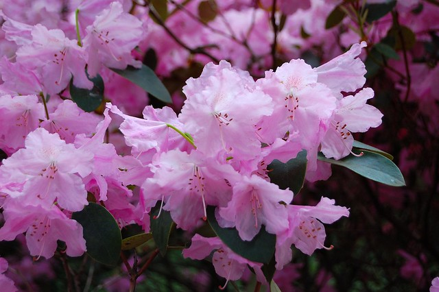 Bremen: Rhododendron Park | No Apathy Allowed