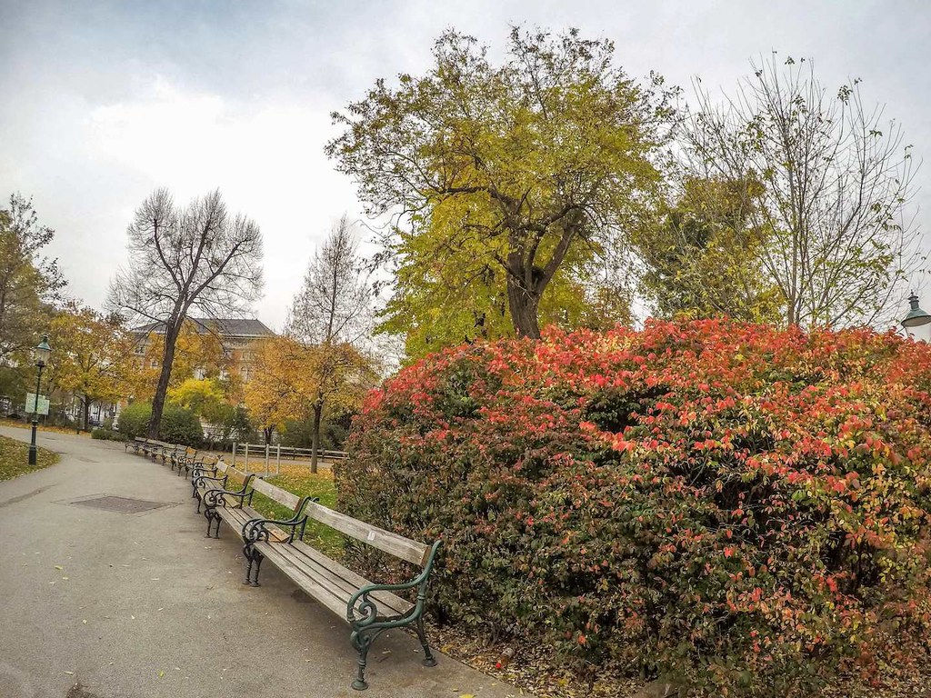 Red bushes in Stadtpark, Vienna