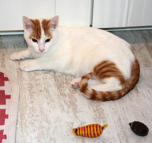Gary, gatito blanco y naranja cruce Van Turco esterilizado muy activo nacido en Julio´16, en adopción. Valencia. ADOPTADO. 31178466612_09be8c9ce7