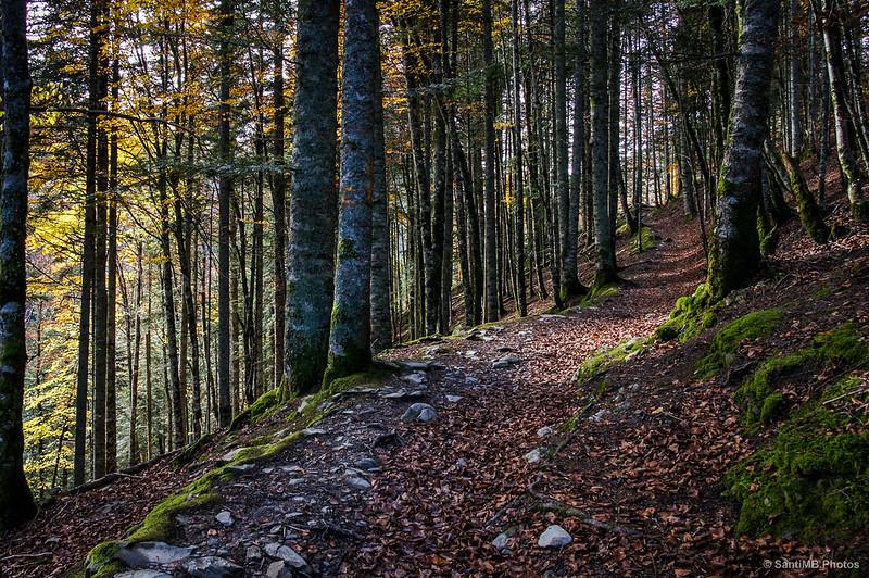 Ascendiendo por Zabaleta, Selva de Irati