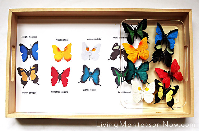 Safari Ltd Butterflies TOOB Key Matching Activity