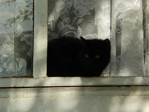 7 крымских котов | horoshogromko.ru