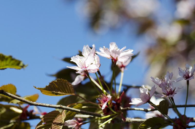 kirsikka13