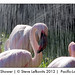Flamingo Pink Shower