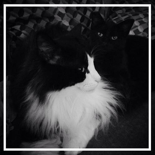 Oscar & Mei-Mei