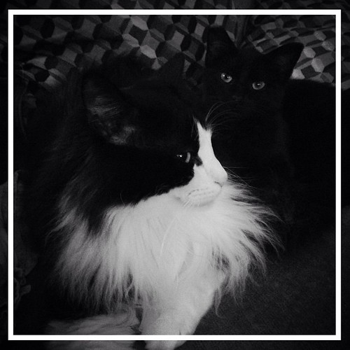 NaBloPoMo May 15, 2015 - Black and White