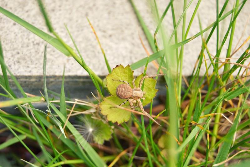 araña en el jardin