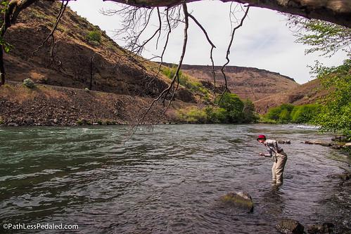Oregon Troutback