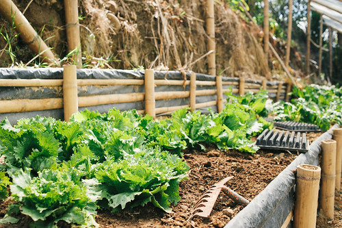 Sustainably grown vegetables in the farm